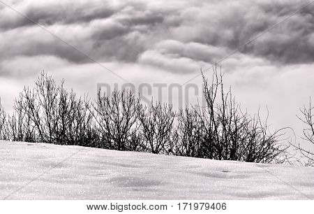 twigs between dark and white clouds and snow