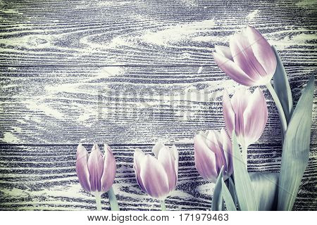 Tulip Flowers On Vintage Wooden Boards
