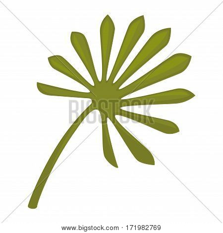 Saw palmetto leaf isolated on white background. Serenoa repens sole big green leaf. Realistic vector illustration of pot plant widely used in home decor, big leaves for flower bouquets composition
