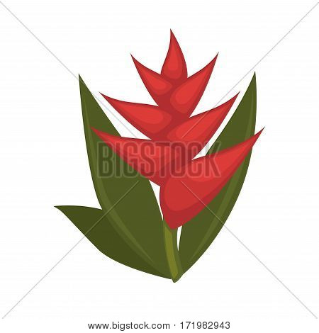 Salvia with green leaves and red flowers isolated on white background. Common genus names scarlet sage, tropical sage. Pot plant widely used in home decor, realistic vector illustration in flat style