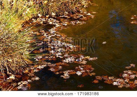 Natural phenomenon of frozen pond in Richmond Park, London