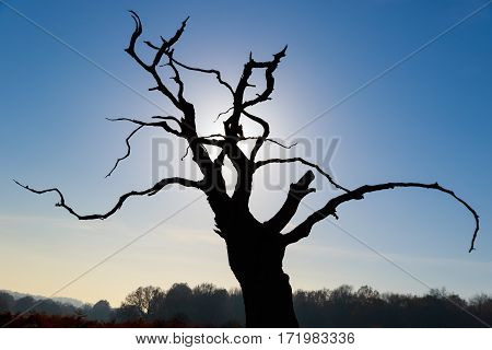 Silhouette of a leafless tree in Richmond Park