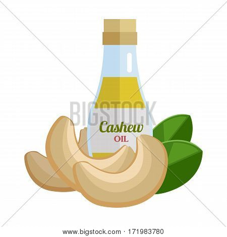 Cashew oil and nuts vector. Flat design. Healthy food, diet and cosmetic products. Seasoning. Culinary ingredient, source of protein, vitamins, fatty acids. Isolated on white background.