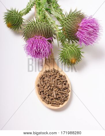 Granular And Fresh Thistle With Flowers. (silybum Marianum)