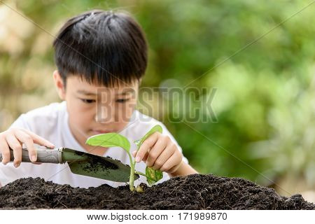 Young Thai Boy Planting Little Seedling