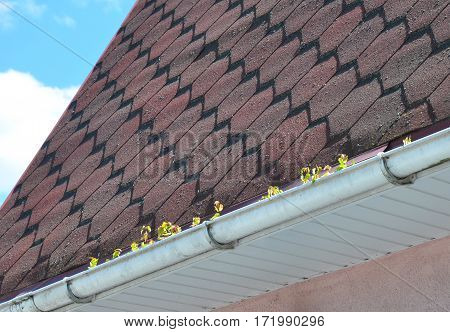 What happens when you don't clean your rain gutters. Common Gutter Problems With Moss on the Roof
