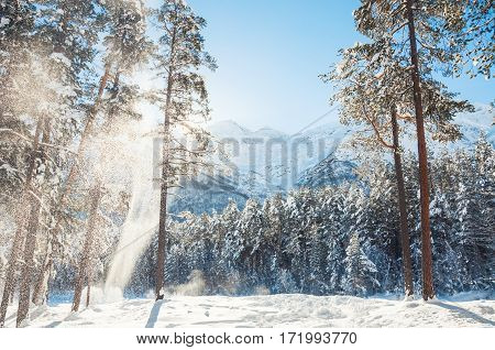 Forest And Mountains After Snowfall At Sunny Day