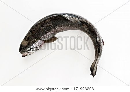 Fresh Fish Salmon Sea Trout On A White Background Isolated