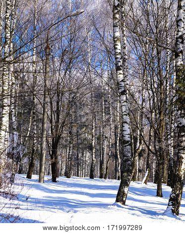 beautiful winter landscape in city Park tree