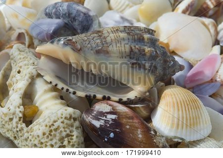 Collection Shells