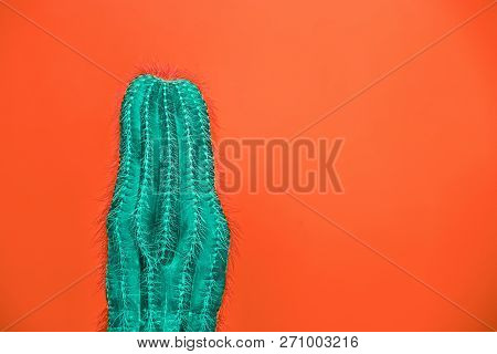 Cactus Fashion Set Design. Minimal Stillife. Trendy Bright Colors. Green Plant On Red Background