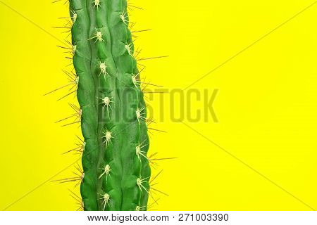Cactus Fashion Set Design. Minimal Stillife. Trendy Bright Colors. Green Plant On Yellow Background