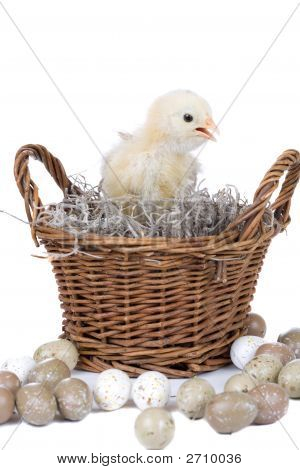 Cute little chicken sitting in a basket surrounded by eggs poster