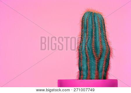 Cactus Fashion Set Design. Minimal Stillife. Trendy Bright Colors. The Green Plant On Pink Backgroun