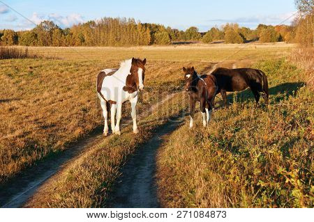 Horses In The Field, White Horse With Red Spots, Horse And Foal