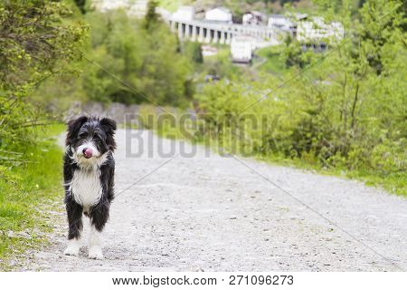 Dog Outdoor In A Park Along A River, Bichon Havanais Breed