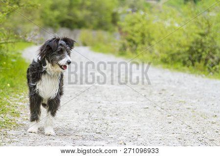 Dog Outdoor In A Park Along A River, Bichon Havanais Male Gender