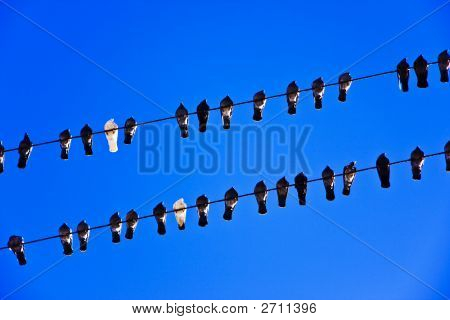 Picture Of The Pigeons Sitting On The Elecrtic Lines