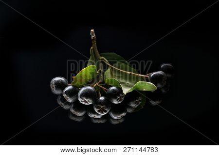 Black chokeberry, isolated on black background.