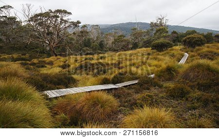 Maryland Track In Cradle Mountain.