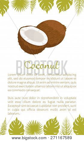 Coconut Exotic Fruit Vector Poster With Text Sample And Palm Leaves. Tropical Food, Plant In Brown S