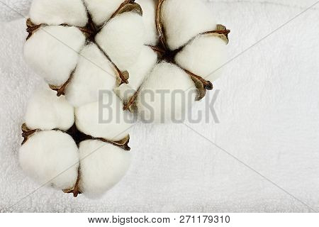 Cotton Boll Flowers And White Fluffy Towel. Image Shot From An Overhead Top View With Free Space For
