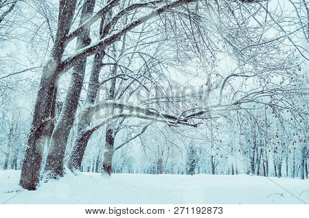 Winter landscape. Wonderland winter forest with winter forest trees covering with frost and snow. Snowy winter forest scene, beautiful winter forest nature