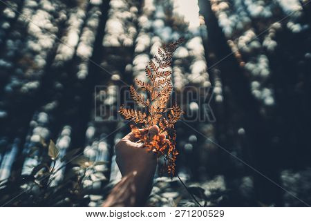 Conifer Cone And Fern In The Jungle,hand Is Holding