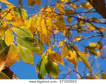 Bright Sun-lit Yellows And Greens In Detail Against A Blue Sky.