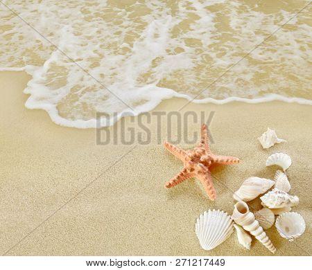 Starfish and shells on sandy beach.