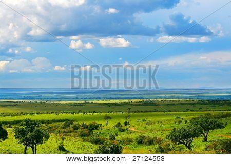 Beautiful landscape. Africa. Kenya. Masai Mara