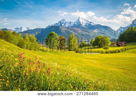 Beautiful View Of Idyllic Alpine Mountain Scenery With Blooming Meadows And Snowcapped Mountain Peak