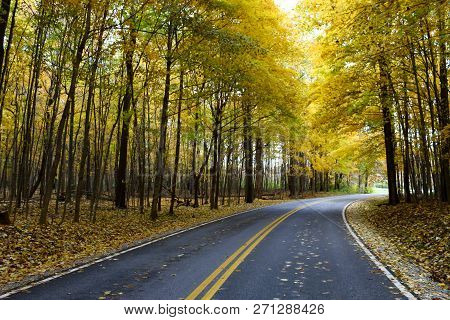 Autumn At The Road With Colorful Fall Tress At The Side Of The Road