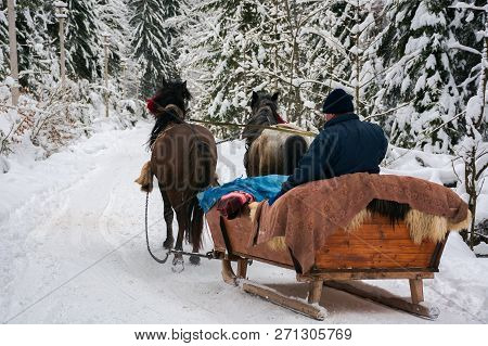 National Nature Park Synevir, Ukraine - Feb 11, 2018: Winter Ride In Horse Sleigh. View From The Bac