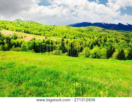 Beautiful Mountainous Countryside In Springtime. Grassy Meadows And Forested Hill. Freshness Of Natu