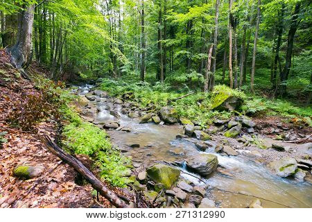 Wild River In Ancient Forest. Lovely Summer Scenery Of Wilderness