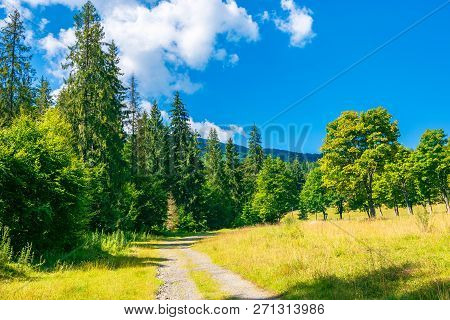 Country Road Among The Forest In Mountains. Lovely Summer Scenery On A Sunny Day