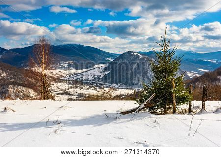 Small Spruce Tree Near The Wooden Fence On The Edge Of A Snowy Slope. Beautiful Winter Landscape On