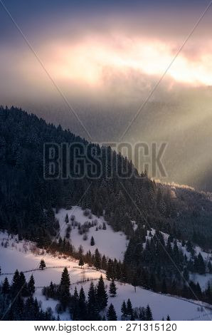 Beautiful Winter Scenery In Morning Light. Spruce Forest On A Snowy Slope With Rural Fields And Wood