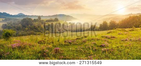 Panorama Of Beautiful Foggy Sunset In Mountains. Purple Thyme Flowers On The Grassy Meadow. High Mou