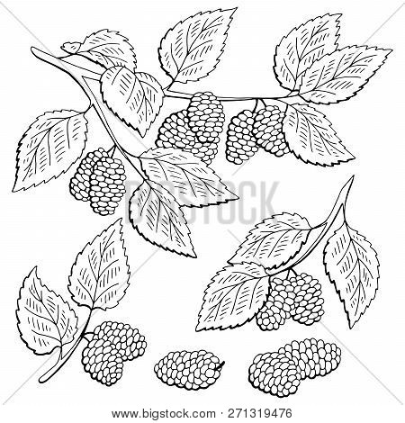 Mulberry Berry Branch Graphic Black White Isolated Set Sketch Illustration Vector