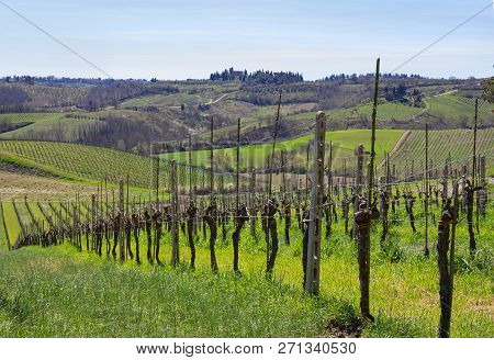 Spring Landscape With Vineyard In Tuscany, Italy.