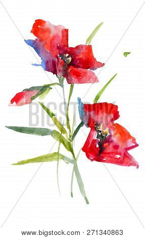 Red Poppies Watercolor Sketch. Isolated From Background Picture