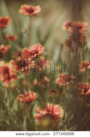 Being In Full Bloom. Flowering Plants. Flowers In Blossom. Blossoming Flowers On Nature Landscape. I