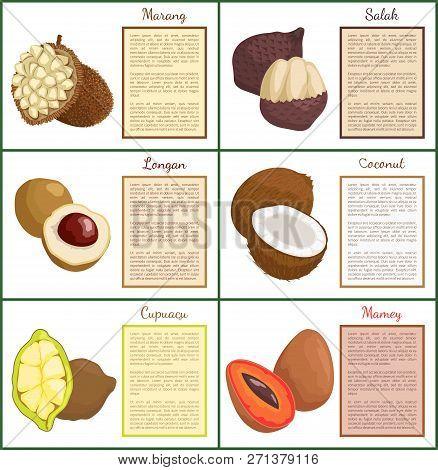 Salak And Longan Posters Set Text Sample Vector. Marang And Coconut, Cupuacu Organic Exotic Tropical