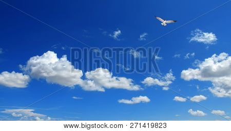 Cloudscape image with flying seagull over blue sunny sky with clouds
