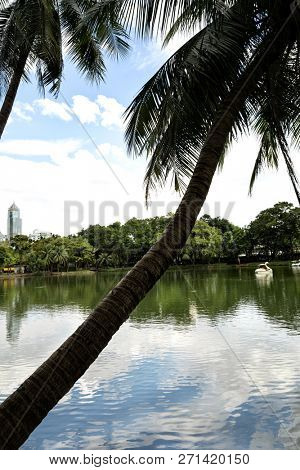 Landscape of lakeside view with palm trees in Lumphini Park in Bangkok, Thailand