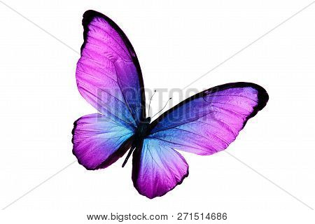 Eautiful Purple Butterfly Isolated On White Background