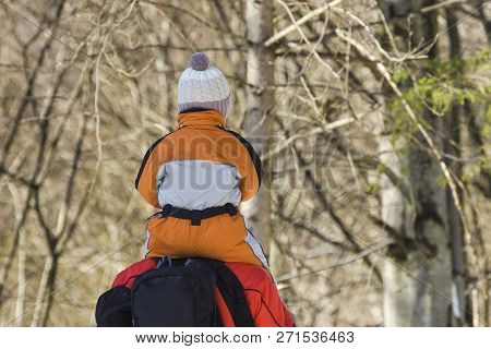 Man With Backpack And Son On Shoulders Stands Against The Background Of Coniferous Trees In The Fore