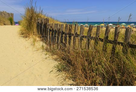 Fence Between Sea Dunes In Apulia,italy. The Regional Natural Park Dune Costiere (torre Canne) Cover